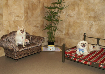 pet day care san antonio